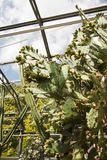 Green, huge cactus in the greenhouse. In retro colours and style Stock Photo
