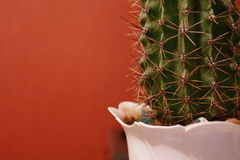 Green huge and sharp cactus next to orange background Royalty Free Stock Photo