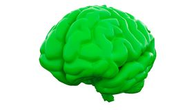 Green Human brain on white background. Anatomical Model, 3d illustration. Orange Human brain on white background. Anatomical Model, 3d illustration royalty free stock photos