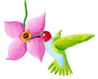 Green humming bird and flower Stock Photos