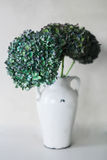 Green hydrangea flowers on a gray background. Green hydrangea flowers in white vase on a gray background Stock Photography