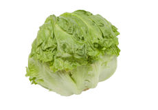 Green iceberg lettuce Royalty Free Stock Photos