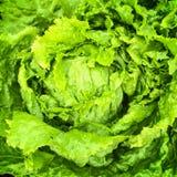 Green iceberg lettuce Royalty Free Stock Photography