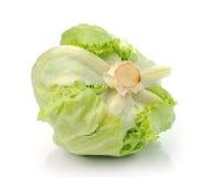 Green Iceberg lettuce on White Background Stock Images