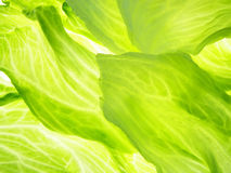 Green iceberg salad Stock Images