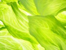 Green iceberg salad stock images