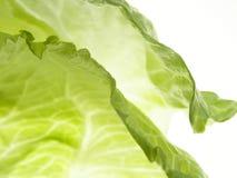 Green iceberg salad Stock Photo