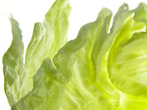 Green iceberg salad stock image