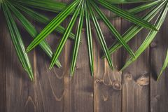 Green Ieaf background around old wood with space, Vintage toned. Royalty Free Stock Photography