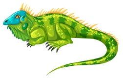 Free Green Iguana Crawling Alone Stock Images - 68860744
