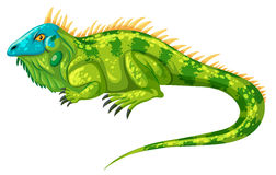 Green iguana crawling alone Stock Images