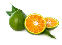 Green Indian tangerines Royalty Free Stock Photos