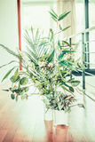 Green indoor plant decoration in white pots and vase. In modern room Royalty Free Stock Photos