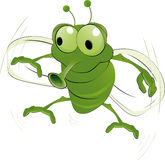 Green an insect. Animals parasitic pest mosquito Royalty Free Stock Images