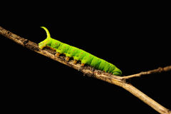 Green insect stock photo