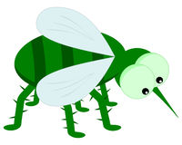 A green insect with big eyes Royalty Free Stock Photos