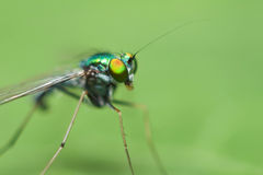 Green insect close up Stock Photo