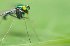 Green insect close up Stock Image