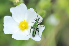 Green insect on a flower Stock Photo