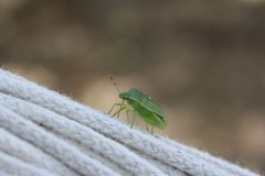 Green insect Royalty Free Stock Photography