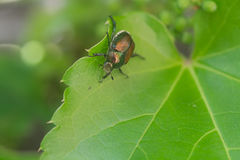 Green insect Stock Photography