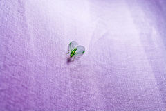 Green insect with wings closeup macro on purple cloth Stock Photos