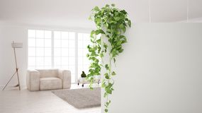 Green interior design concept background with copy space, foreground white wall with potted plant, contemporary white living room. Green interior design concept royalty free illustration
