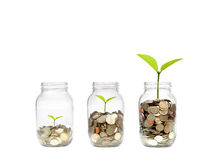 Green investment. Business growth with csr practice / Green investment concept Royalty Free Stock Image
