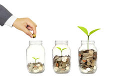 Green investment. Business growth with csr practice / Green investment concept Stock Photos