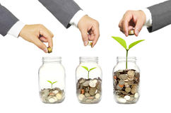 Green investment. Business growth with csr practice / Green investment concept Stock Images