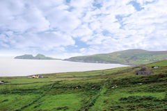 Green irish fields and islands view Stock Photos