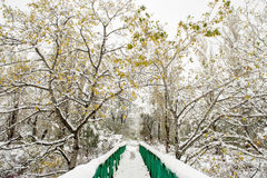 Green iron bridge in the park among the snow-covered trees Stock Images