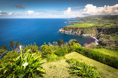 Green island in the Atlantic Ocean, Sao Miguel, Azores, Portugal Royalty Free Stock Image