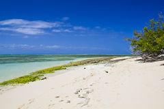 Green Island beach Royalty Free Stock Image