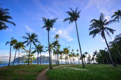 Landscape of tropical sea at sunny day. Green island with many palm trees and grass, blue sea background stock photography