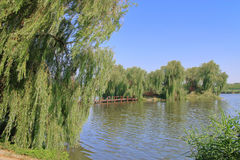 Green island in the middle of the lake. The picture was taken in Ukraine. The picture shows a lake in the middle of which a green island overgrown with weeping stock images