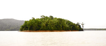 A green island in the middle of the river. A small island,full of green trees, located at the middle of a river in Southern India Royalty Free Stock Photos