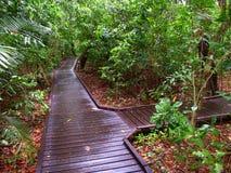 Green Island National Park - Australia. A nature path through the forest of Green Island National Park - Queensland, Australia Stock Images