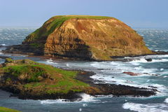 Green island in south Australia. Lonely wild island and shore of the ocean on Phillip island in Australia Stock Image