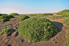 Green islands in coastal sand, Greece. One Green islands in coastal sand, Greece Royalty Free Stock Photo