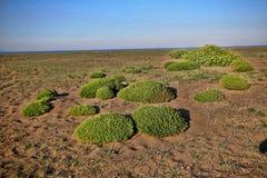 Green islands in coastal sand, Greece. One Green islands in coastal sand, Greece Stock Photos