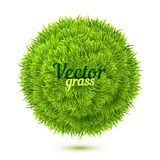 Green isolated grass ball on white background Stock Photography
