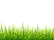 Green isolated grass on white background Stock Photo