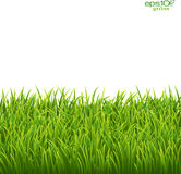Green isolated grass on white background Royalty Free Stock Images