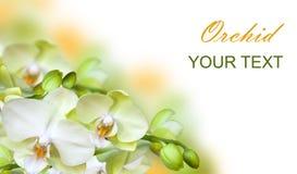 green isolerad orchid Royaltyfria Bilder
