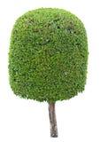 green isolerad växtwhite royaltyfri foto