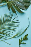 green isolerade leaves Royaltyfria Bilder