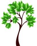 green isolerade treen Arkivfoto