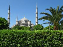 Green Istanbul. Trees and bushes of Istanbul, Blue Mosque Stock Photos