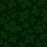 Green Ivy Background Stock Photos